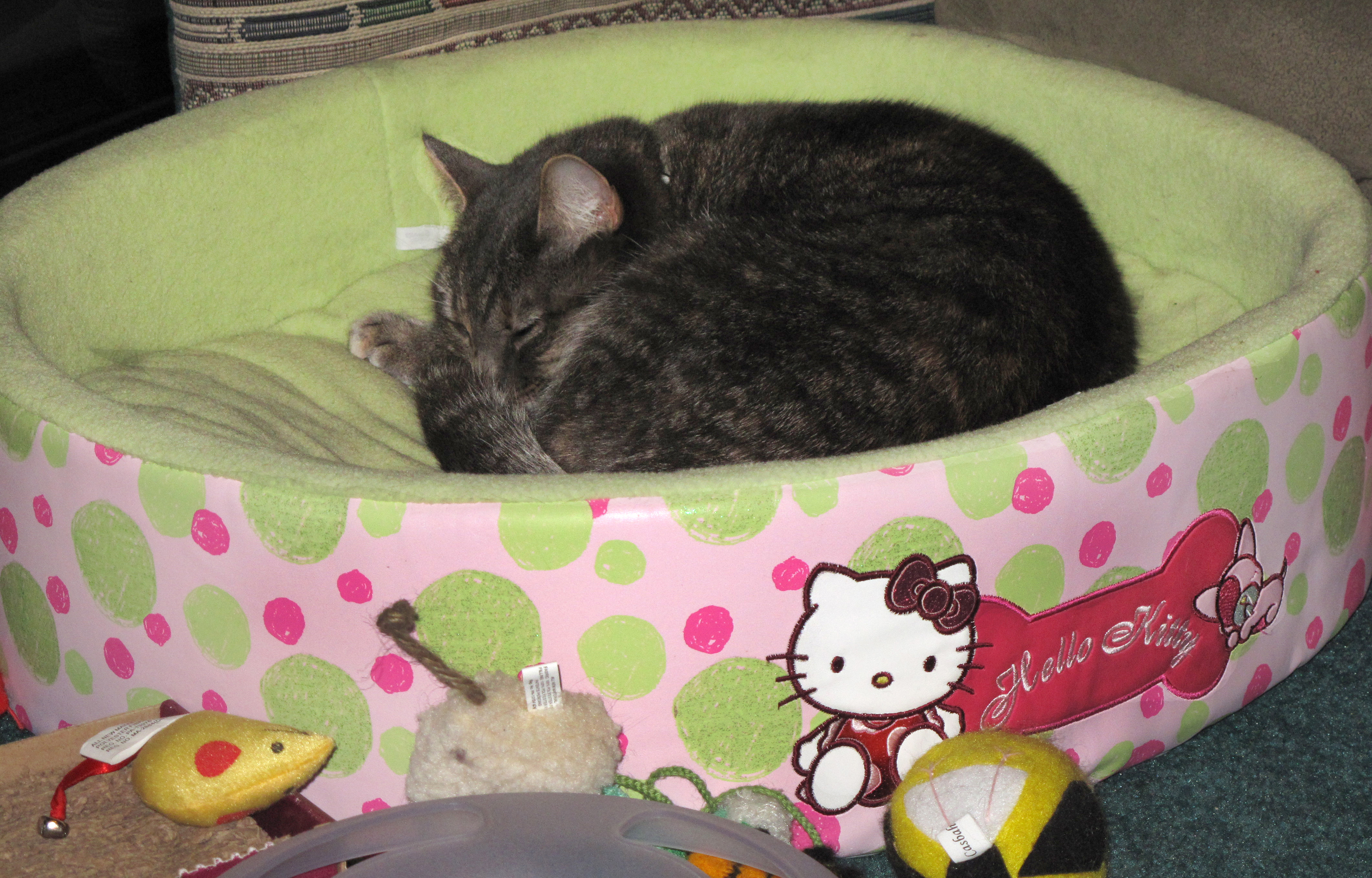 Cat Dog Bed Pink